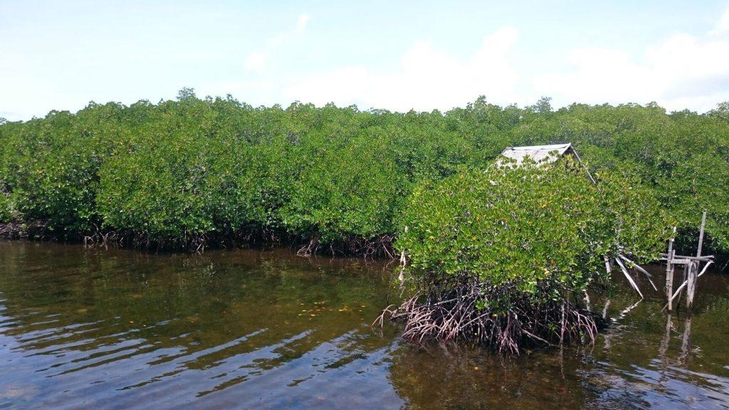 Lamanoc island landing