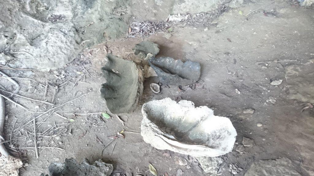 Lamanoc island shells
