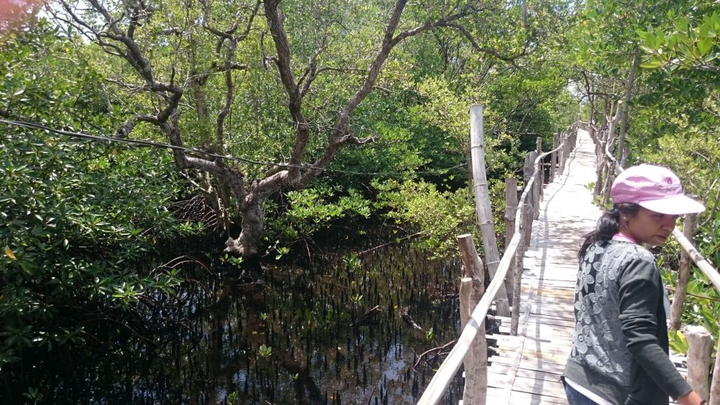 Lamanoc island Mangroves